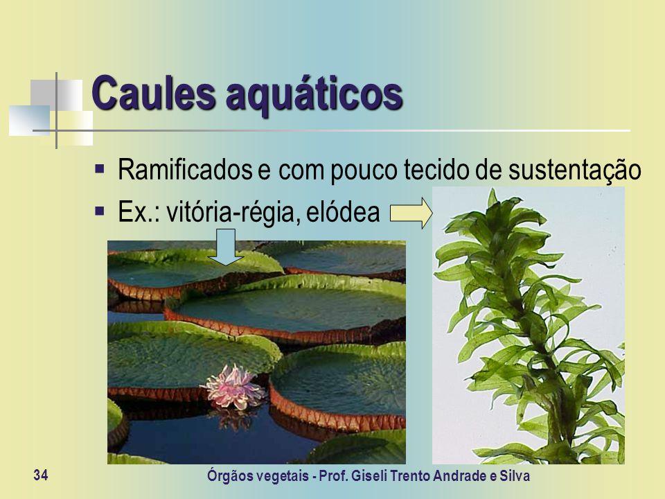 Órgãos vegetais - Prof. Giseli Trento Andrade e Silva 34 Caules aquáticos Ramificados e com pouco tecido de sustentação Ex.: vitória-régia, elódea