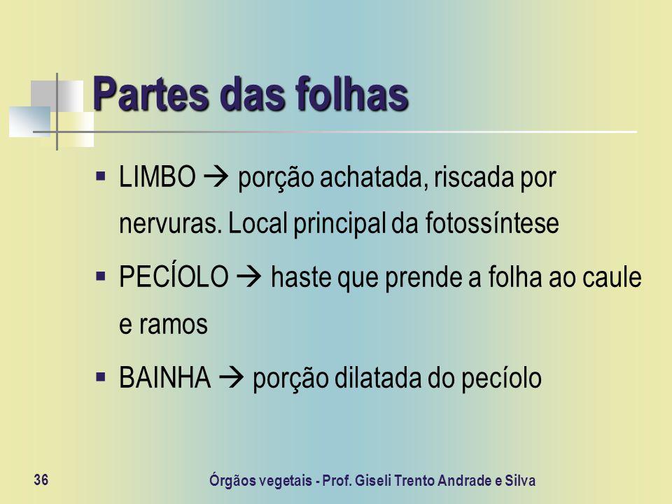 Órgãos vegetais - Prof. Giseli Trento Andrade e Silva 36 Partes das folhas LIMBO porção achatada, riscada por nervuras. Local principal da fotossíntes