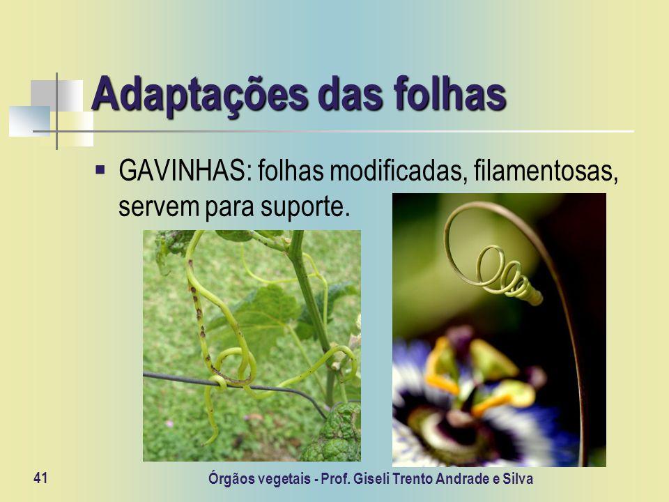 Órgãos vegetais - Prof. Giseli Trento Andrade e Silva 41 Adaptações das folhas GAVINHAS: folhas modificadas, filamentosas, servem para suporte.