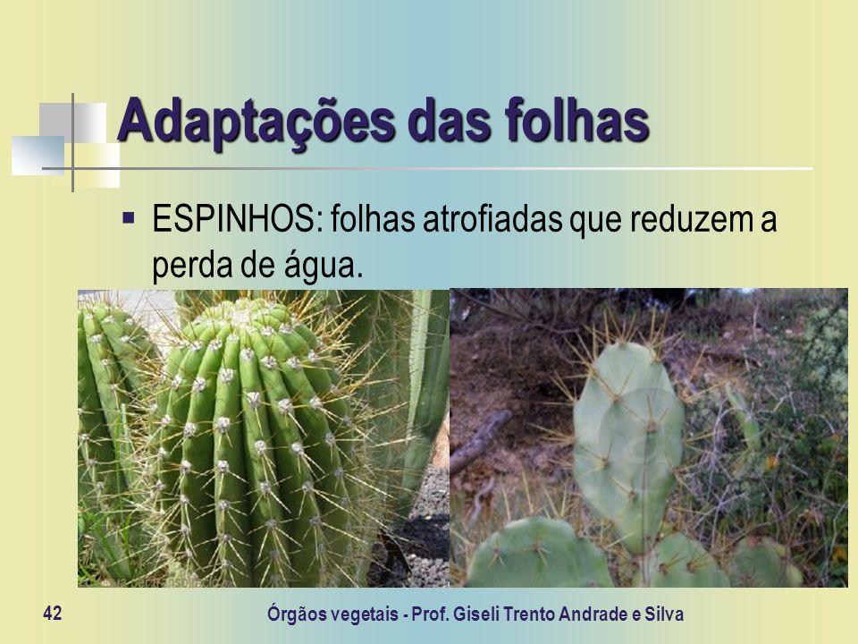 Órgãos vegetais - Prof. Giseli Trento Andrade e Silva 42 Adaptações das folhas ESPINHOS: folhas atrofiadas que reduzem a perda de água.