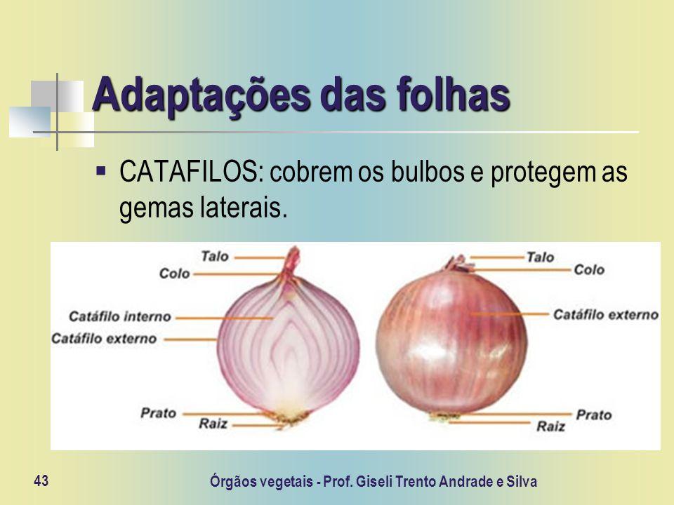 Órgãos vegetais - Prof. Giseli Trento Andrade e Silva 43 Adaptações das folhas CATAFILOS: cobrem os bulbos e protegem as gemas laterais.