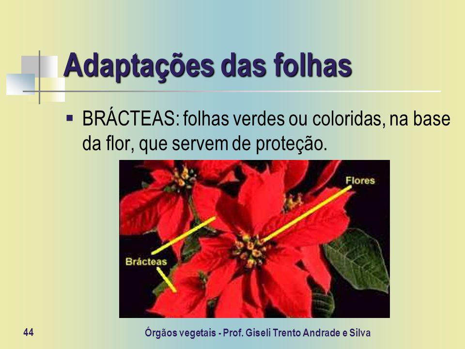 Órgãos vegetais - Prof. Giseli Trento Andrade e Silva 44 Adaptações das folhas BRÁCTEAS: folhas verdes ou coloridas, na base da flor, que servem de pr