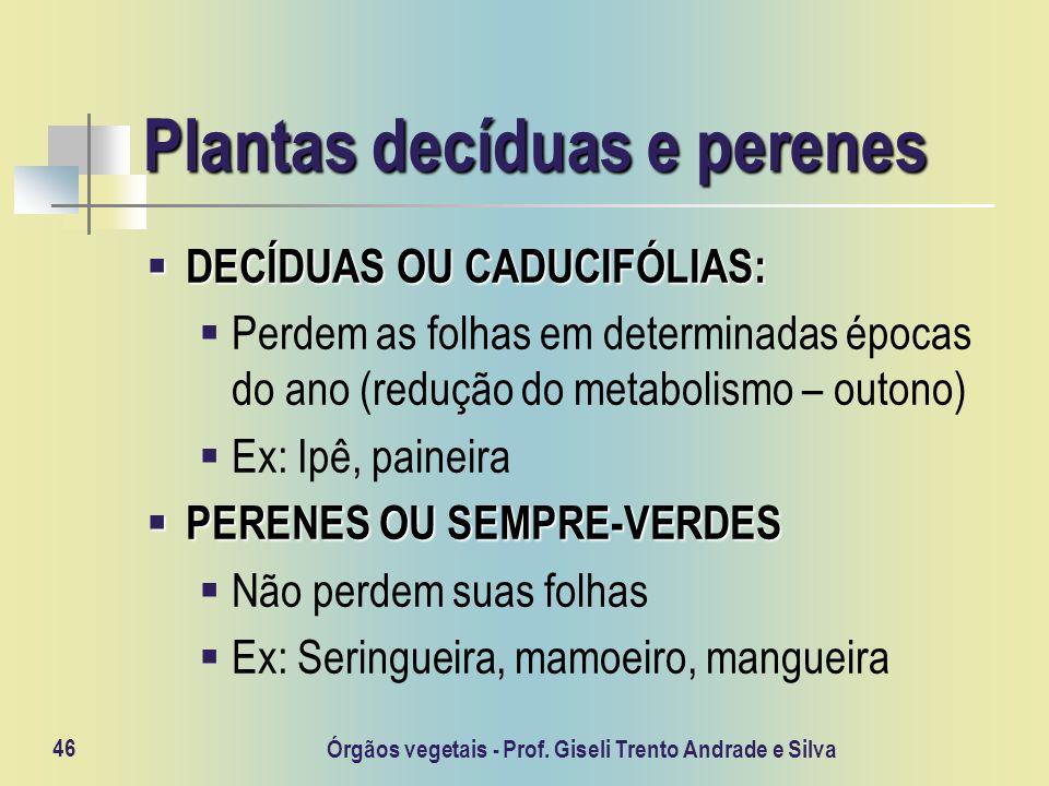 Órgãos vegetais - Prof. Giseli Trento Andrade e Silva 46 Plantas decíduas e perenes DECÍDUAS OU CADUCIFÓLIAS: DECÍDUAS OU CADUCIFÓLIAS: Perdem as folh