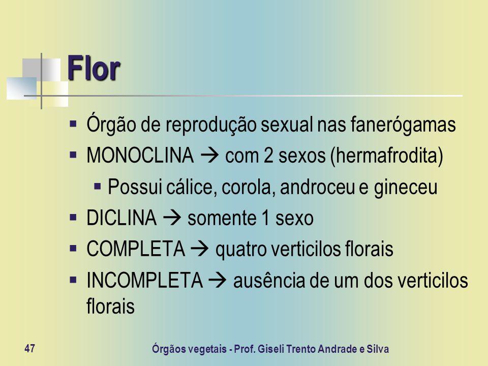 Órgãos vegetais - Prof. Giseli Trento Andrade e Silva 47 Flor Órgão de reprodução sexual nas fanerógamas MONOCLINA com 2 sexos (hermafrodita) Possui c
