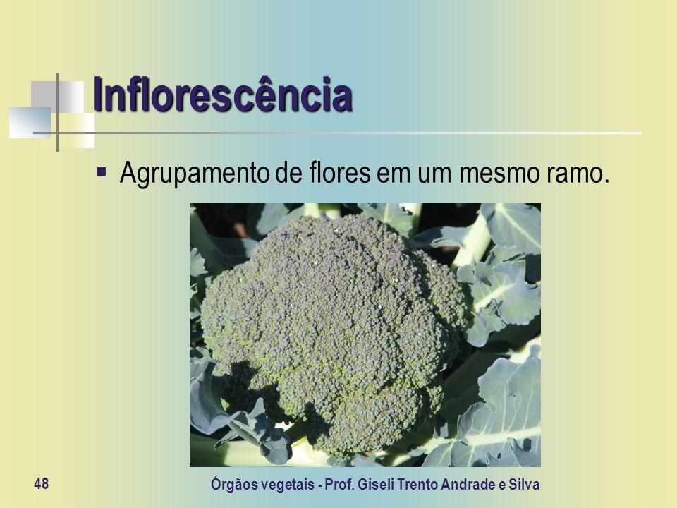 Órgãos vegetais - Prof. Giseli Trento Andrade e Silva 48 Inflorescência Agrupamento de flores em um mesmo ramo.