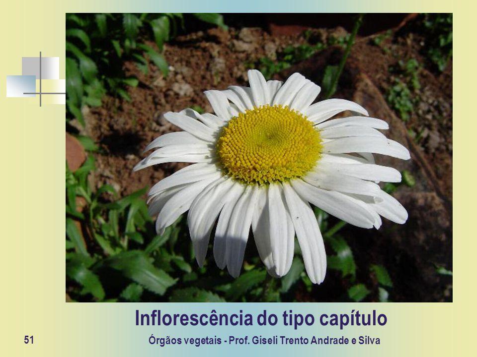 Órgãos vegetais - Prof. Giseli Trento Andrade e Silva 51 Inflorescência do tipo capítulo