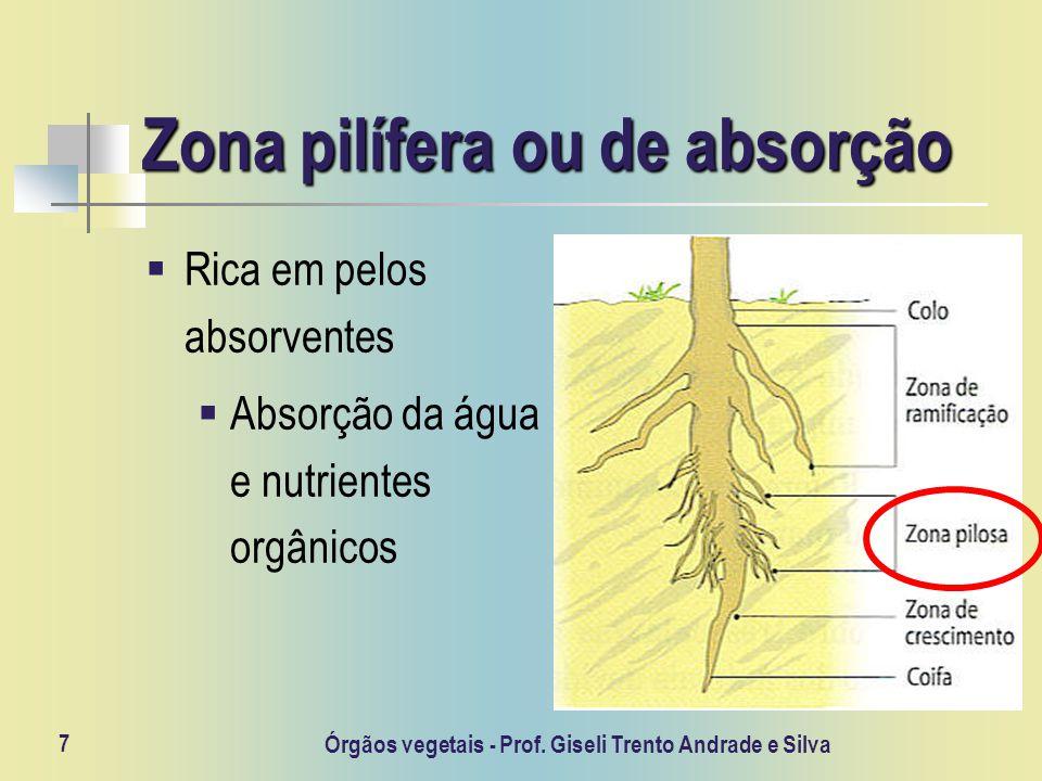 Órgãos vegetais - Prof. Giseli Trento Andrade e Silva 7 Zona pilífera ou de absorção Rica em pelos absorventes Absorção da água e nutrientes orgânicos