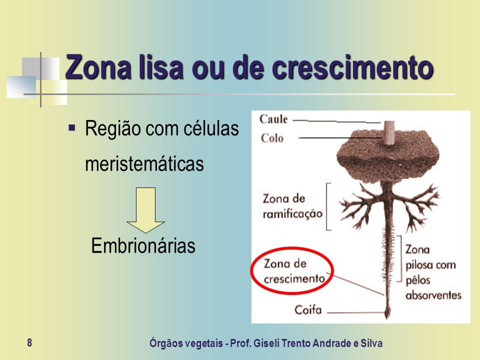 Órgãos vegetais - Prof. Giseli Trento Andrade e Silva 8 Zona lisa ou de crescimento Região com células meristemáticas Embrionárias