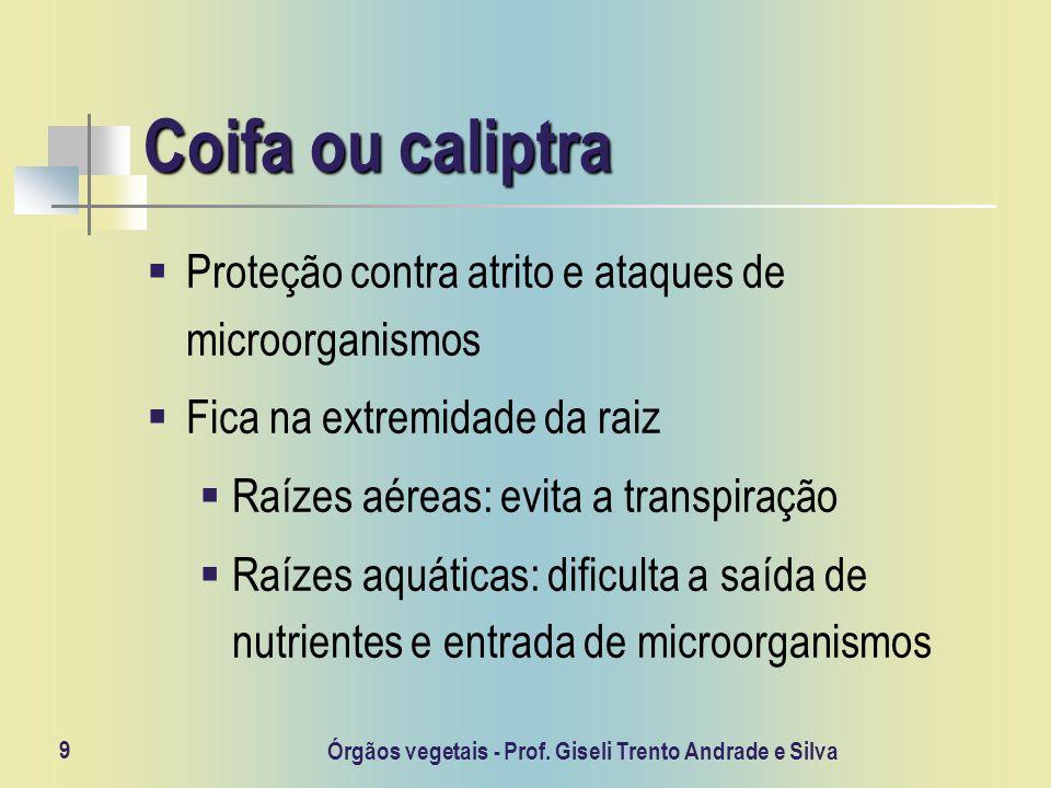 Órgãos vegetais - Prof. Giseli Trento Andrade e Silva 9 Coifa ou caliptra Proteção contra atrito e ataques de microorganismos Fica na extremidade da r
