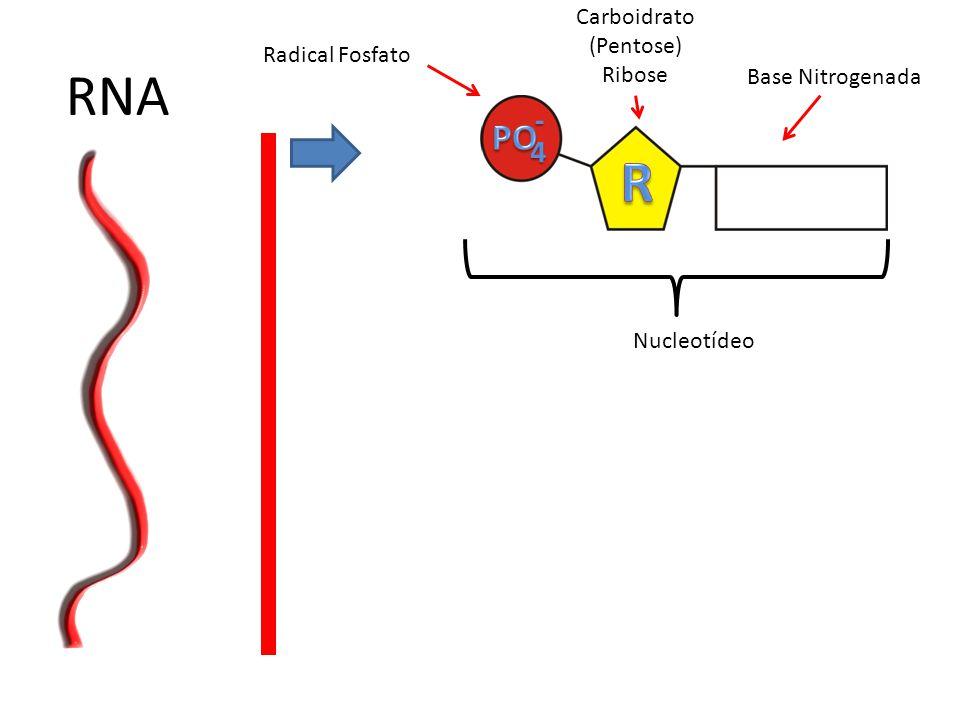 RNA 4- Radical Fosfato Carboidrato (Pentose) Ribose Base Nitrogenada Nucleotídeo