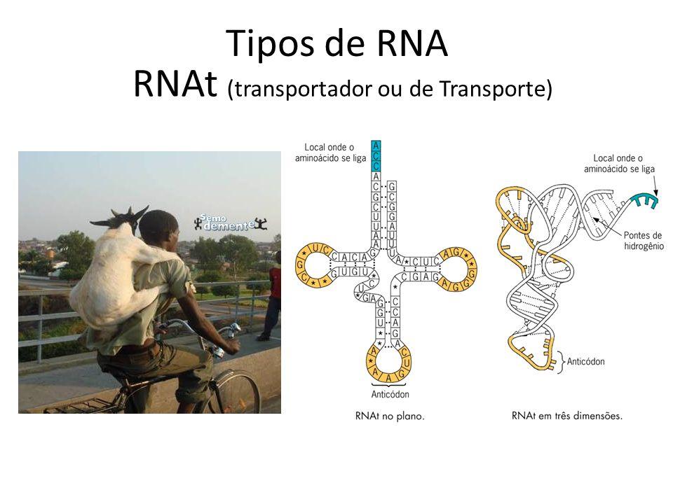 Tipos de RNA RNAt (transportador ou de Transporte)