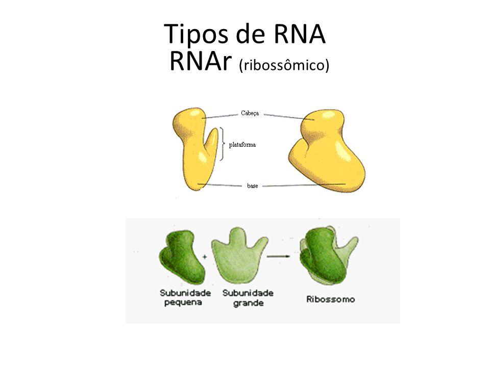 Tipos de RNA RNAr (ribossômico)