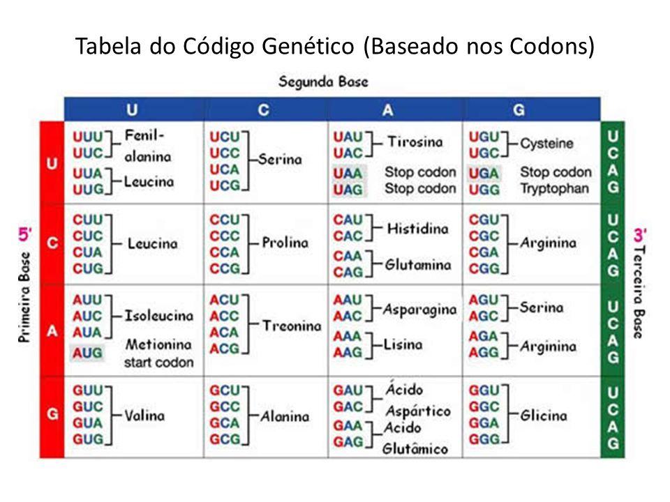 Tabela do Código Genético (Baseado nos Codons)