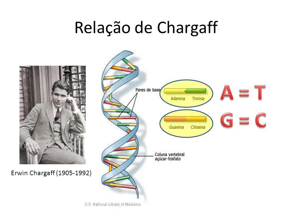 Relação de Chargaff Erwin Chargaff (1905-1992)