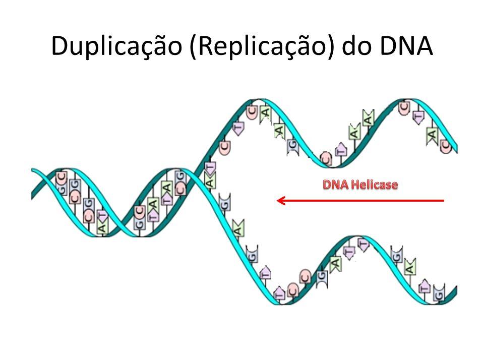 Duplicação (Replicação) do DNA