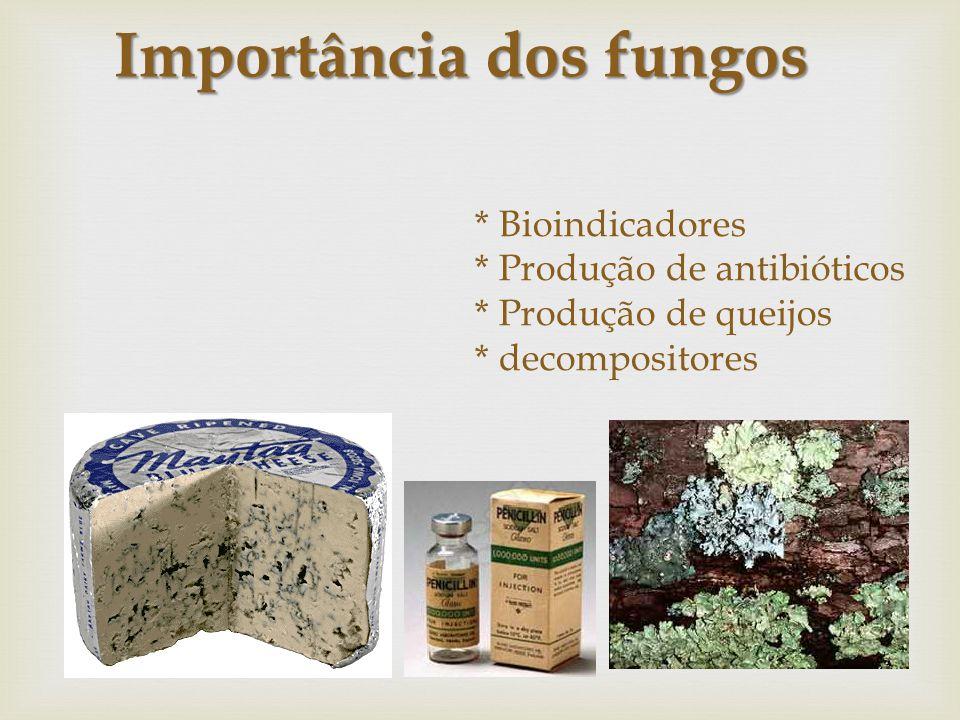 * Bioindicadores * Produção de antibióticos * Produção de queijos * decompositores Importância dos fungos