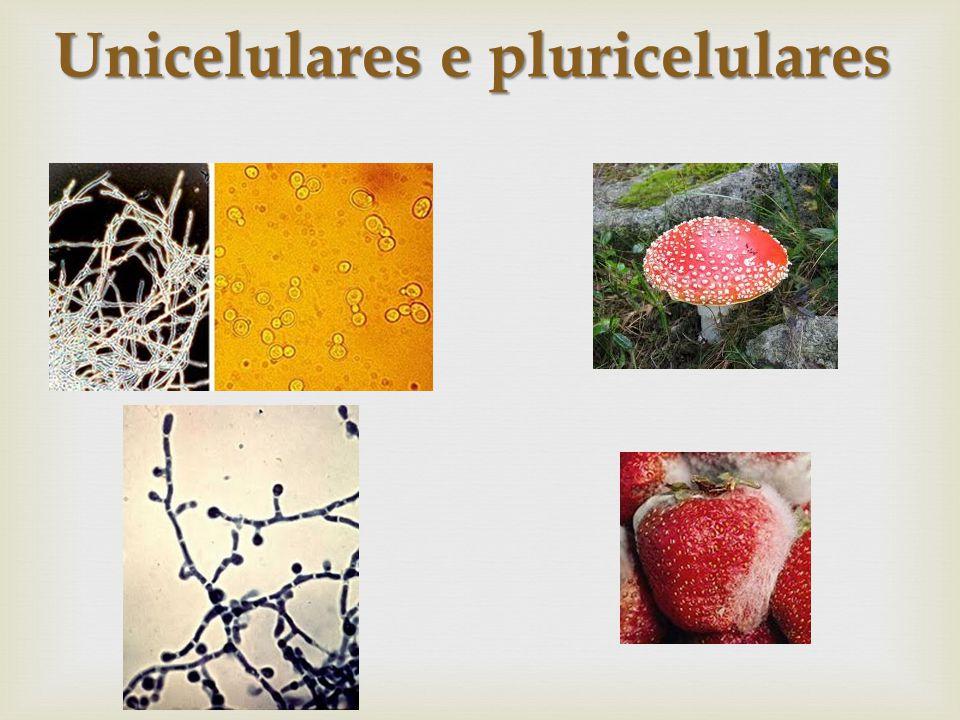 Unicelulares e pluricelulares