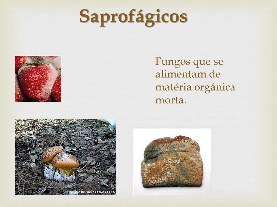 Fungos que se alimentam de matéria orgânica morta. Saprofágicos