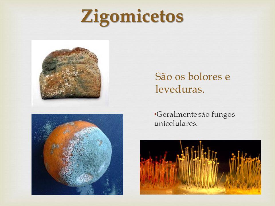 São os bolores e leveduras. Geralmente são fungos unicelulares. Zigomicetos