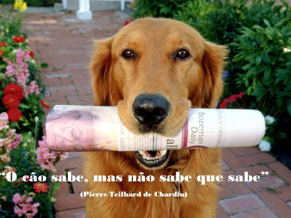 É vergonhoso para nossa espécie que sendo o cão o melhor amigo do homem, seja o homem o pior amigo do cão. (Eduardo Lamazón)
