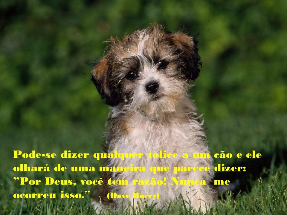 Se um cão não vem até você depois de olhar-lhe na cara, é melhor ir para casa e examinar sua consciência ( Woodrow Wilson)