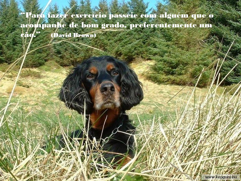 Pode-se dizer qualquer tolice a um cão e ele olhará de uma maneira que parece dizer: Por Deus, você tem razão! Nunca me ocorreu isso. (Dave Barry)