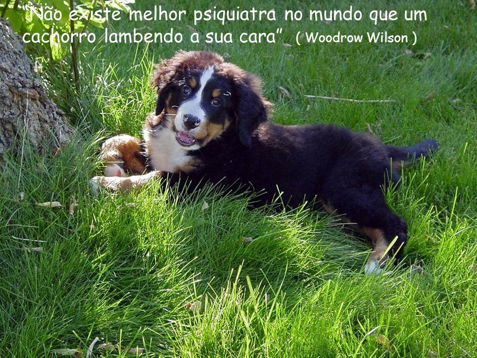 Os animais e a natureza são pouca coisa para o homem quando o homem é pouca coisa.