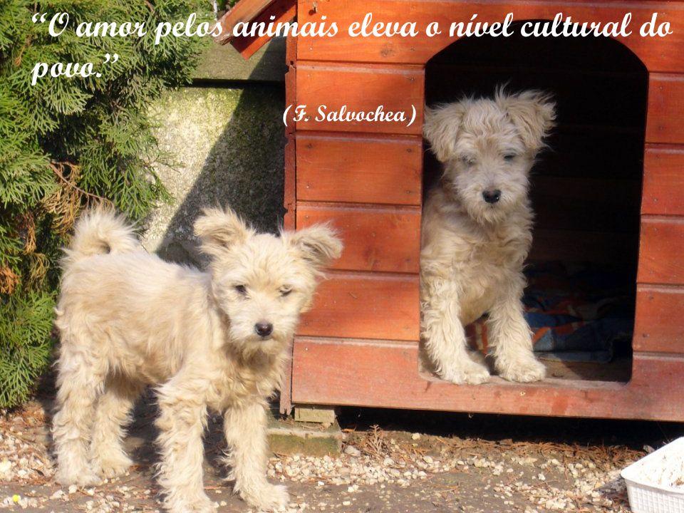 Uma vida sem cachorro é um erro (Carl Zuckmayer)