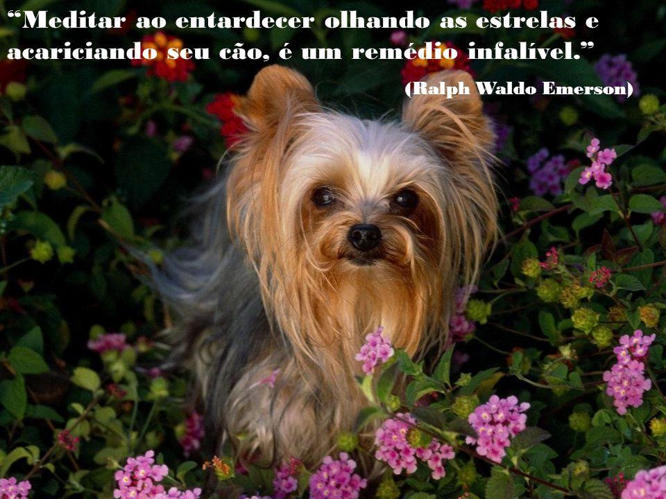 Meditar ao entardecer olhando as estrelas e acariciando seu cão, é um remédio infalível.