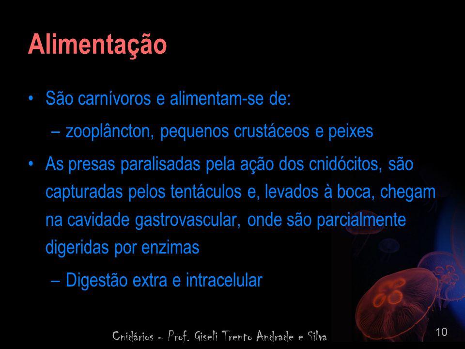 Cnidários - Prof. Giseli Trento Andrade e Silva 10 Alimentação São carnívoros e alimentam-se de: –zooplâncton, pequenos crustáceos e peixes As presas