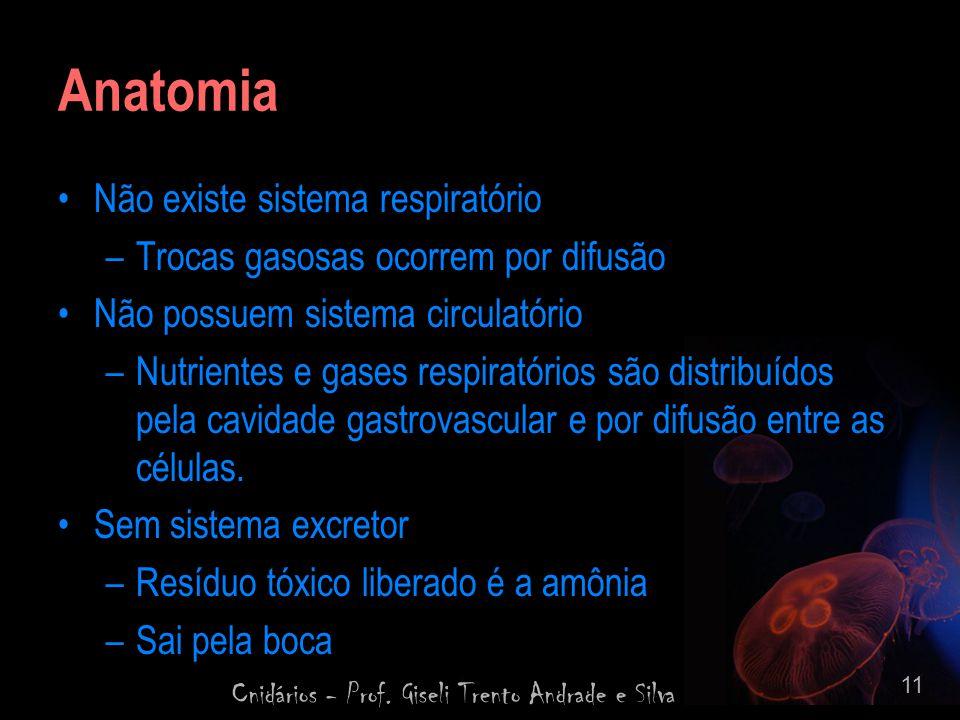 Cnidários - Prof. Giseli Trento Andrade e Silva 11 Anatomia Não existe sistema respiratório –Trocas gasosas ocorrem por difusão Não possuem sistema ci