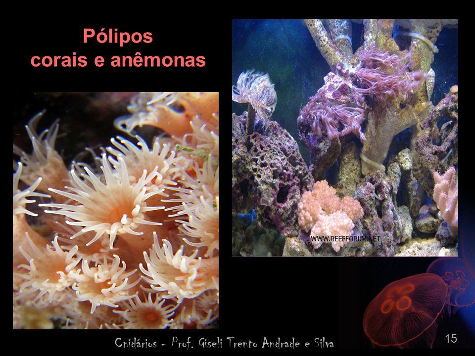 Cnidários - Prof. Giseli Trento Andrade e Silva 15 Pólipos corais e anêmonas