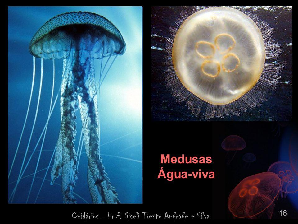Cnidários - Prof. Giseli Trento Andrade e Silva 16 Medusas Água-viva