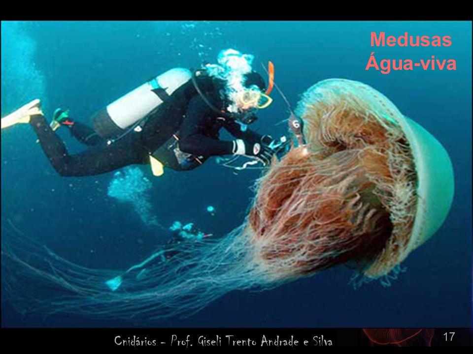 Cnidários - Prof. Giseli Trento Andrade e Silva 17 Medusas Água-viva