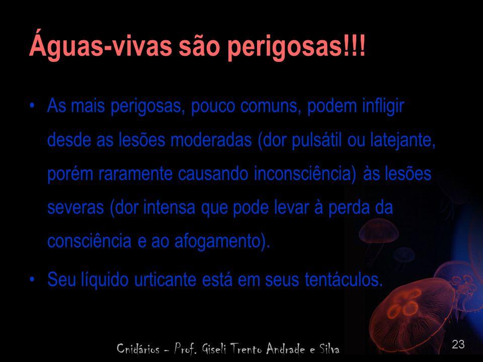 Cnidários - Prof. Giseli Trento Andrade e Silva 23 Águas-vivas são perigosas!!! As mais perigosas, pouco comuns, podem infligir desde as lesões modera
