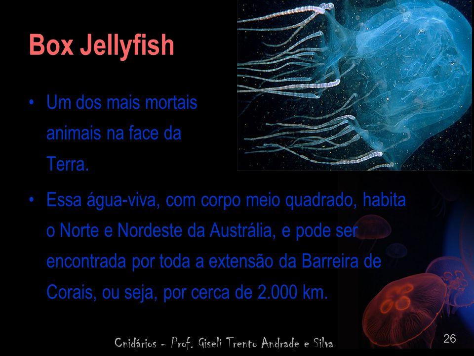 Cnidários - Prof. Giseli Trento Andrade e Silva 26 Box Jellyfish Um dos mais mortais animais na face da Terra. Essa água-viva, com corpo meio quadrado