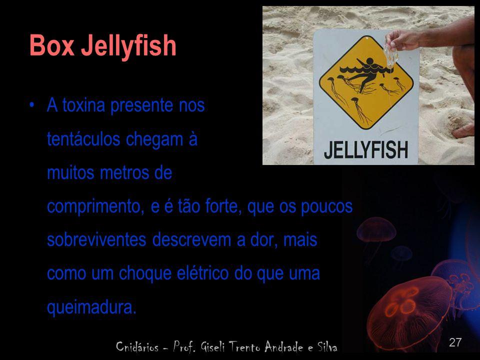 Cnidários - Prof. Giseli Trento Andrade e Silva 27 Box Jellyfish A toxina presente nos tentáculos chegam à muitos metros de comprimento, e é tão forte
