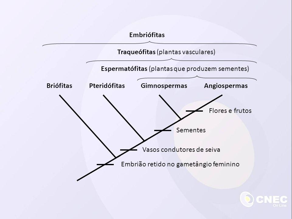 Esporófito maduro (2n) Germinação Pinhão Grãos de pólen são liberados Meiose com formação de grãos de pólen Meiose Megásporo funcional (n) Formação do tubo polínico e fecundação Arquegônio com oosfera (n) Gametófito feminino (n) Embrião (2n) Estróbilo feminino Estróbilo masculino Ciclo reprodutivo das gimnospermas