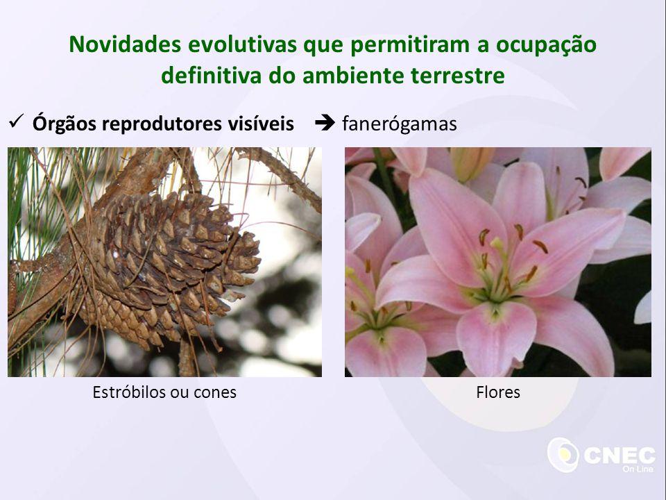 Tubo polínico Novidades evolutivas que permitiram a ocupação definitiva do ambiente terrestre sifonógamas