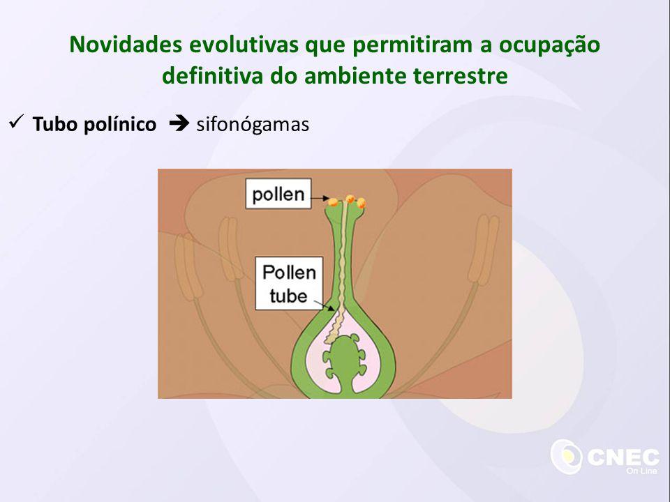 Semente Novidades evolutivas que permitiram a ocupação definitiva do ambiente terrestre Vantagens Dispersão das plantas Proteção do embrião Nutrição do embrião Desvantagens Pode ser predada antes da dispersão Pode cair em locais que não permitem o seu desenvolvimento