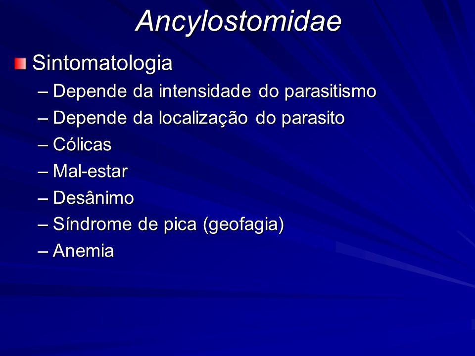 AncylostomidaeSintomatologia –Depende da intensidade do parasitismo –Depende da localização do parasito –Cólicas –Mal-estar –Desânimo –Síndrome de pic