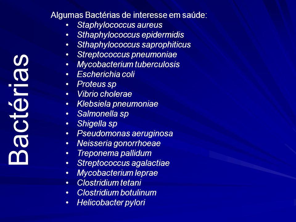 BactériasIntrodução –Procariotas –Unicelulares –UFC