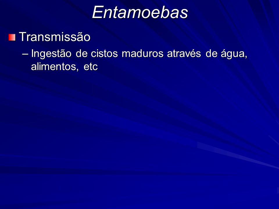 EntamoebasTransmissão –Ingestão de cistos maduros através de água, alimentos, etc