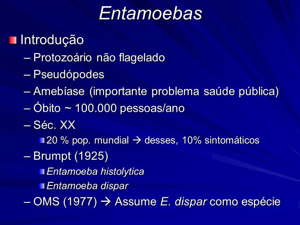 EntamoebasIntrodução –Protozoário não flagelado –Pseudópodes –Amebíase (importante problema saúde pública) –Óbito ~ 100.000 pessoas/ano –Séc.
