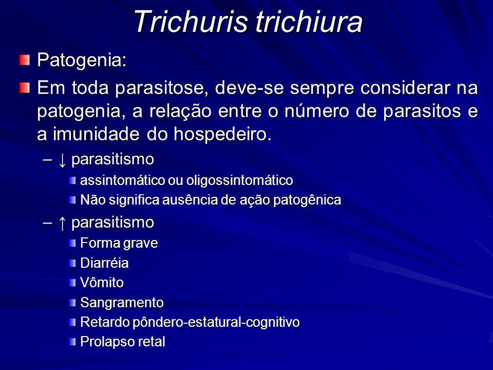 Trichuris trichiura Patogenia: Em toda parasitose, deve-se sempre considerar na patogenia, a relação entre o número de parasitos e a imunidade do hospedeiro.