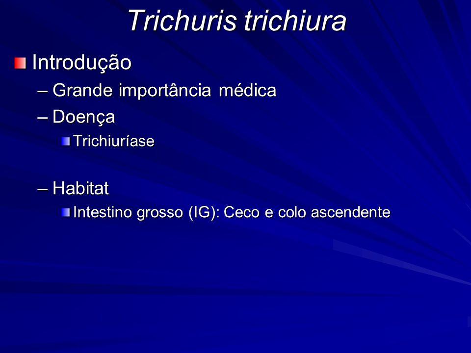 Trichuris trichiura Introdução –Grande importância médica –Doença Trichiuríase –Habitat Intestino grosso (IG): Ceco e colo ascendente