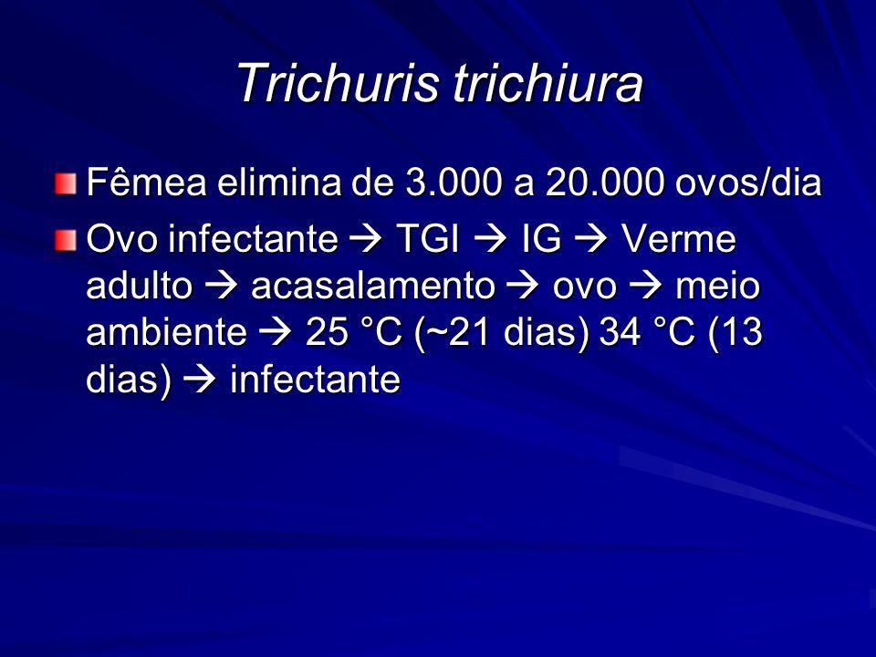 Fêmea elimina de 3.000 a 20.000 ovos/dia Ovo infectante TGI IG Verme adulto acasalamento ovo meio ambiente 25 °C (~21 dias) 34 °C (13 dias) infectante Trichuris trichiura