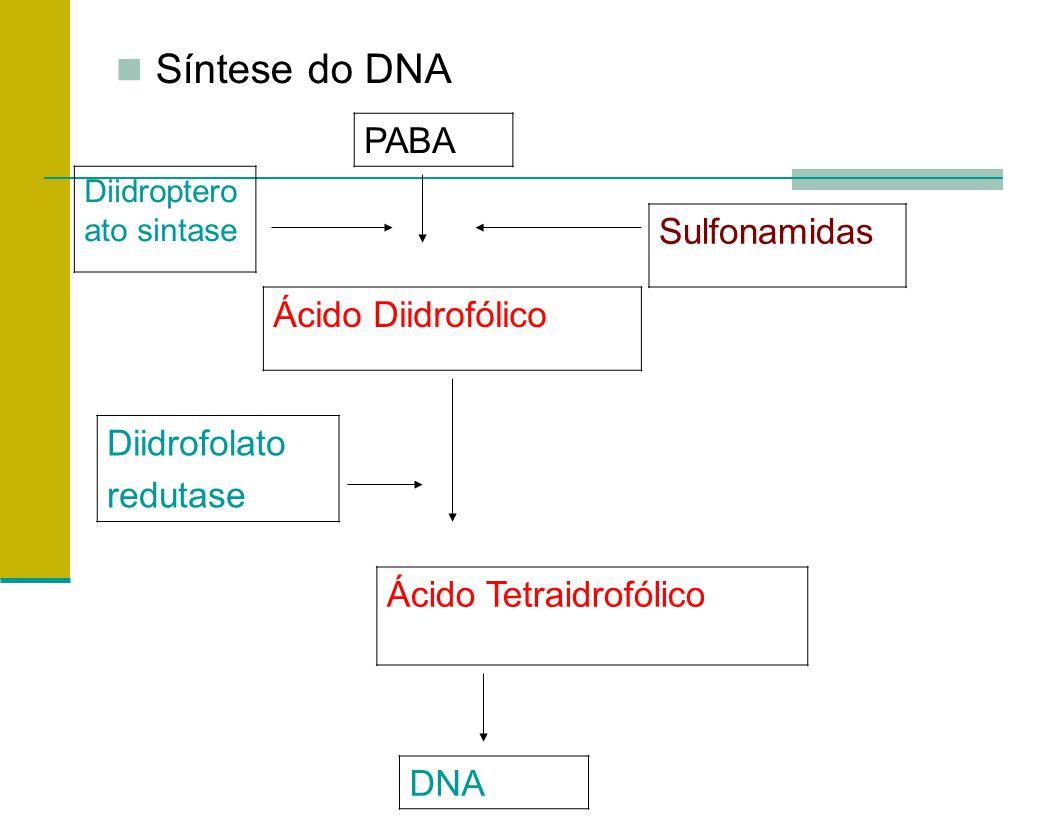 Síntese do DNA PABA Diidroptero ato sintase Sulfonamidas Ácido Diidrofólico Diidrofolato redutase Ácido Tetraidrofólico DNA