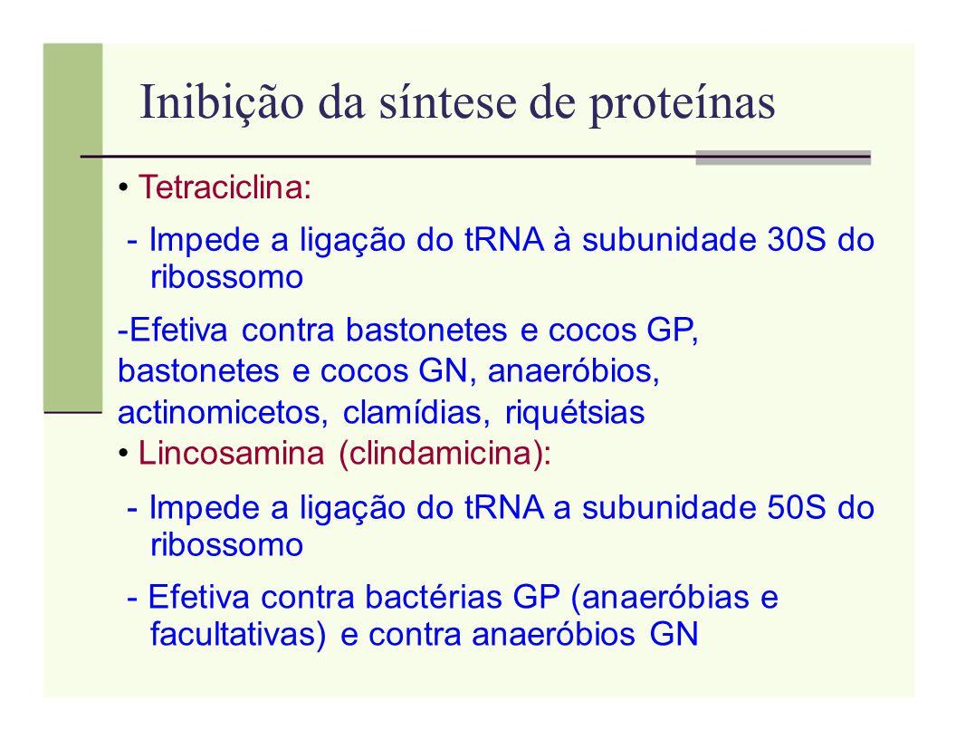 Inibição da síntese de proteínas Tetraciclina: - Impede a ligação do tRNA à subunidade 30S do ribossomo -Efetiva contra bastonetes e cocos GP, bastone