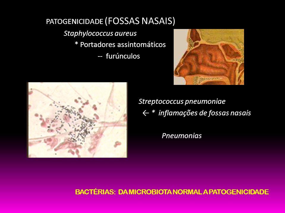 PATOGENICIDADE (FOSSAS NASAIS) Staphylococcus aureus * Portadores assintomáticos -- furúnculos Streptococcus pneumoniae * inflamações de fossas nasais